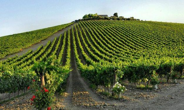 Montepulciano d'Abruzzo – vinul italian cu stil, gust și inspirație