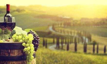 "The best Italian Wine? Wine recommendations from ""Land of wine"""
