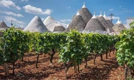 Magnificii din sudul Italiei: Primitivo și Negroamaro