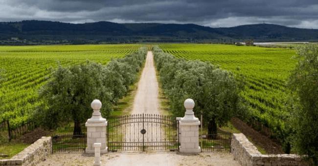 Magnificii din sudul Italiei: Primitivo și Negroamaro 3