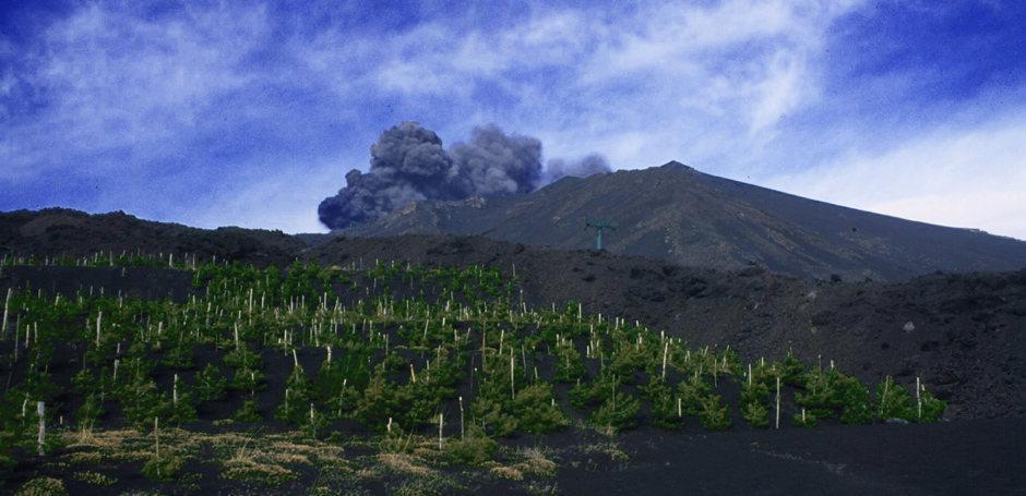 Vinuri din regiunea vulcanului Etna, Sicilia 1