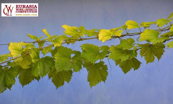 Concursuri internaționale de vinuri 2020. Lauri pentru Moldova 2