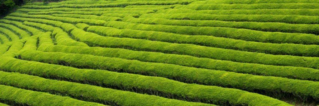 Cum trebuie să fie un ceai? Ceremonia ceaiului în Japonia 7