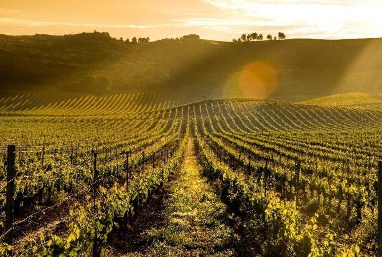 Articole din lumea vinului 5
