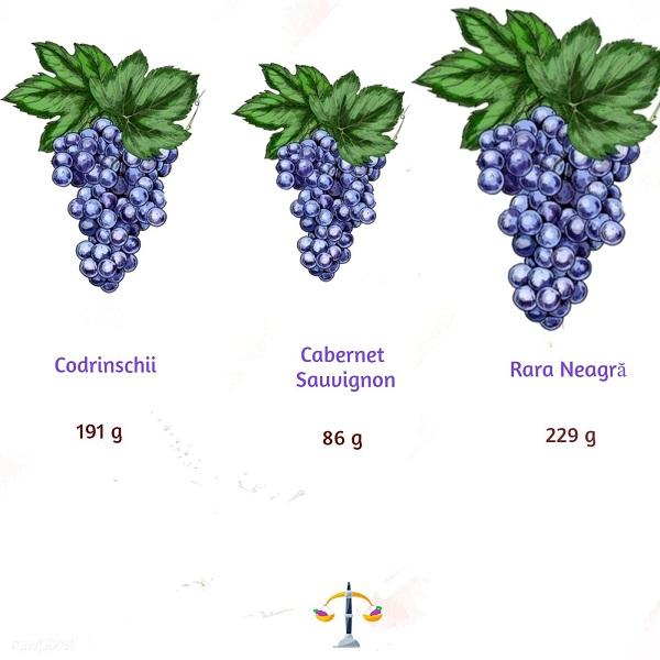 Codrinschii