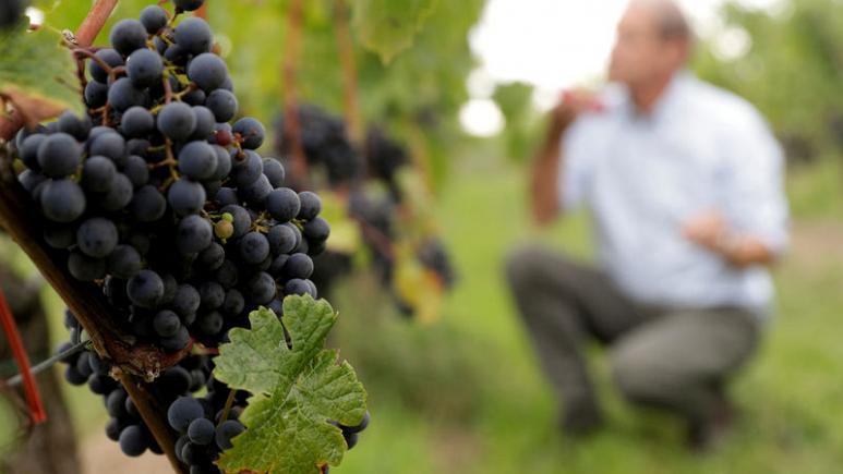 Articole din lumea vinului 10