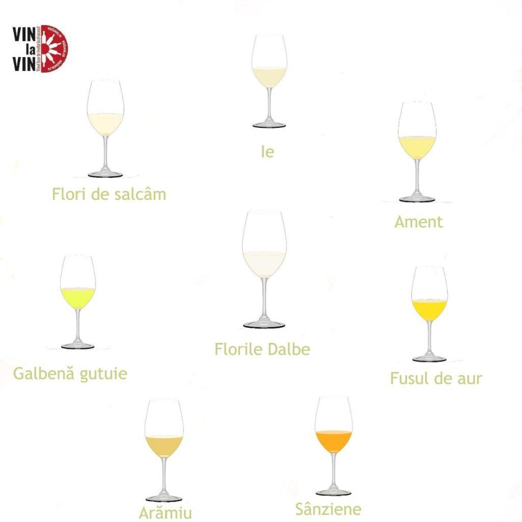 Culorile vinului moldovenesc 1